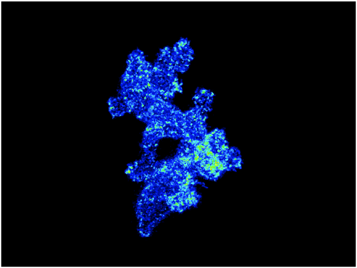 Understanding How Cell Signaling is Regulated During Chemotaxis of Leukocytes in Vivo