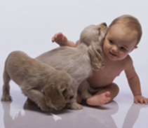 Research at the Department of Pediatrics has shown that infants who are exposed to dogs are less likely to develop allergic diseases.